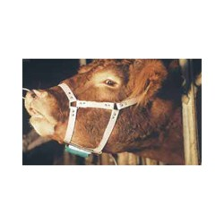 Bull Marking Harness Crayon Type